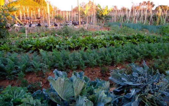 horta orgânica, de onde saem legumes e verduras servidas no refeitório