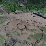 Quantas árvores irão morrer? Leia carta do 3o. Encontro Tocantinense de Agroecologia