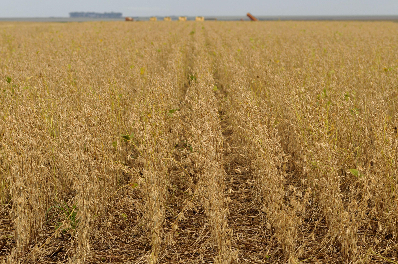 Plantação de soja no Mato Grosso do Sul. Foto: Pulsar
