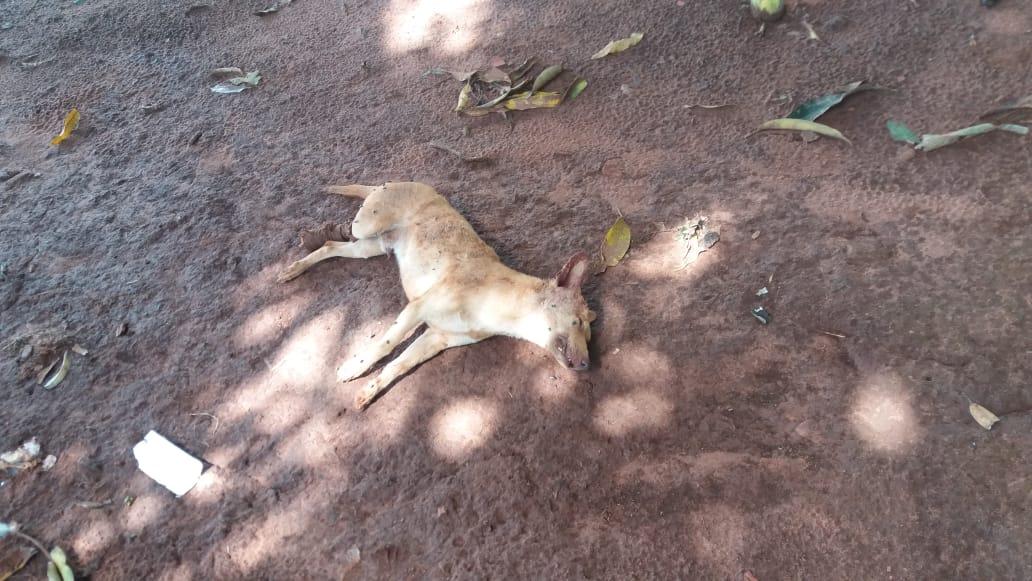Segundo os indígenas, o cachorro de uma das filhas de Leonardo, irmã de Clodiodi, foi morto durante a ação, atropelado pela Força Nacional. Foto: comunidade Guarani Kaiowá