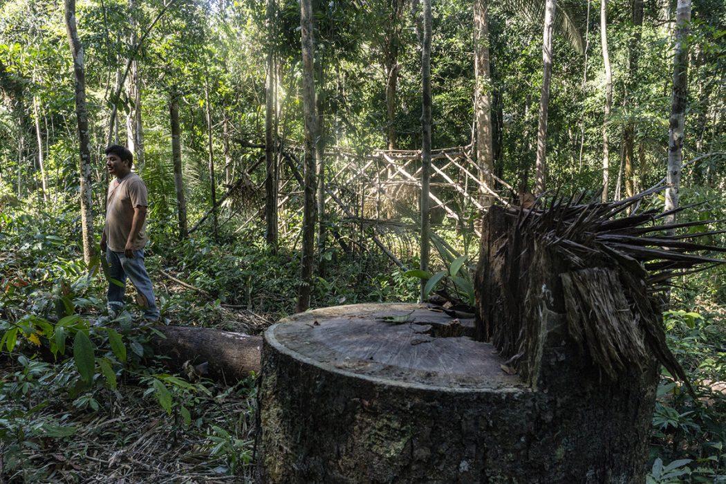 Devido à falta de proteção da área, os invasores chegam a montar acampamentos dentro do território Karipuna para fazer a retirada ilegal de madeira. Foto:RogerioAssis/Greenpeace