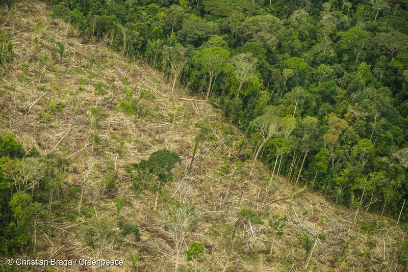 Desmatamento na Terra Indígena Karipuna (RO). Foto por Christian Braga/Greenpeace