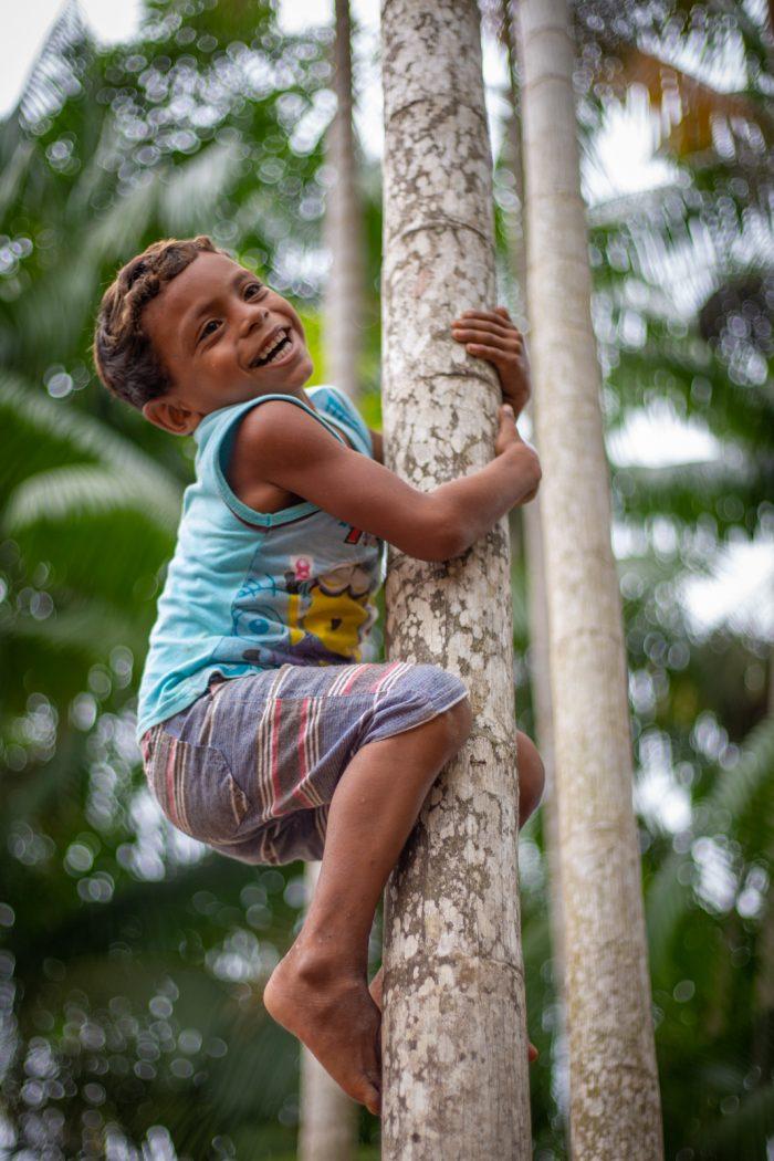 Desde cedo, as crianças da aldeia Ipaupixuna e das outras que compõem o território Munduruku do Planalto aprendem a subir nos pés de açaí, parte da cultura e da alimentação tradicional dos indígenas. Foto: Tiago Miotto/Cimi