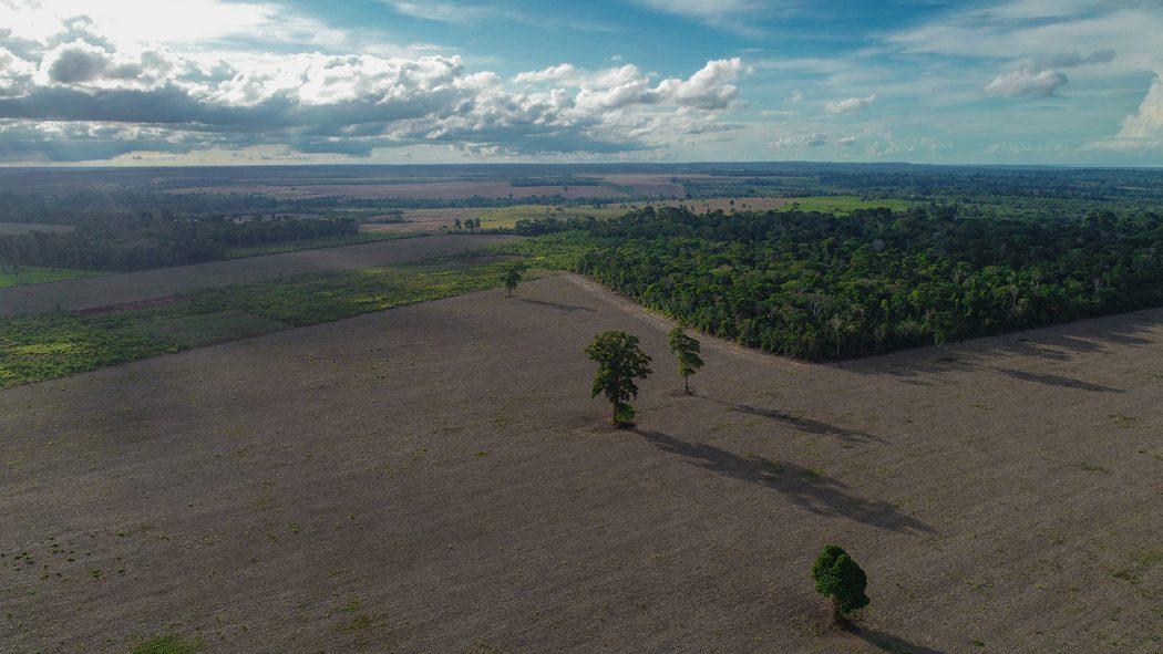 Campos abertos para o plantio da soja vem recortando o território dos Munduruku do Planalto e pressionando os indígenas. Foto: Arthur Massuda/Cimi