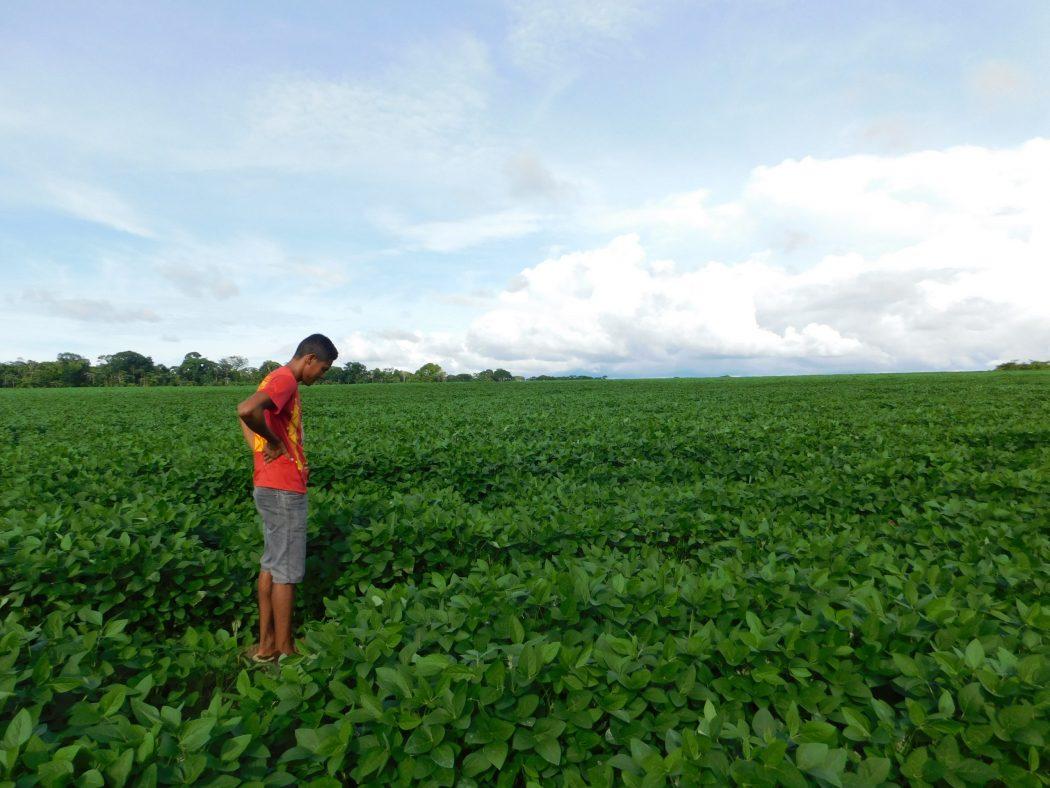 Josenildo Munduruku, cacique da aldeia Açaizal, observa uma das lavouras de soja que vêm avançando sobre a aldeia. Foto: Barbara Dias