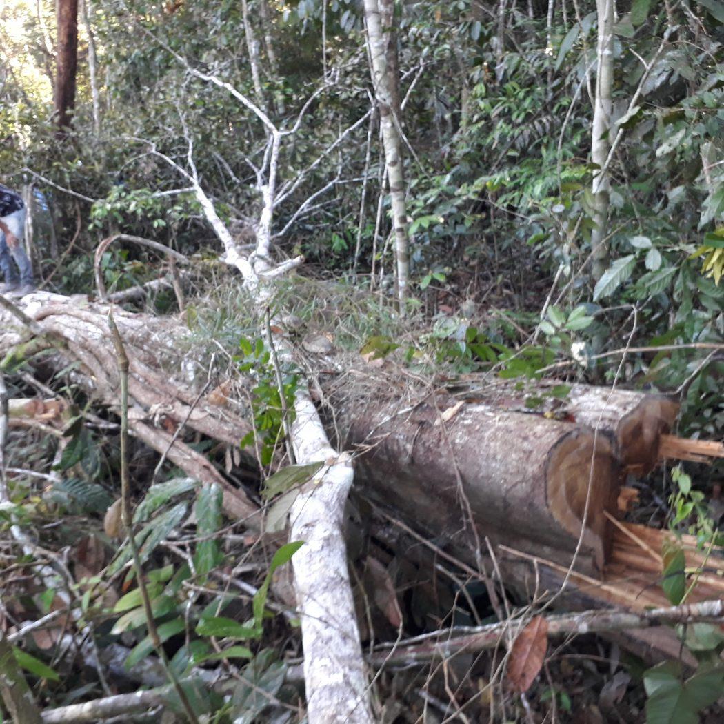 Registros feitos no território dos povos indígena Jamamadi e Apurinã mostram o avanço de invasores. Foto: Povos Jamamadi e Apurinã