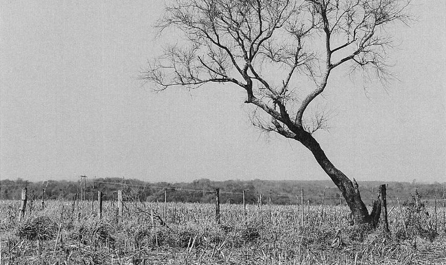 Foto do inquérito policial mostra a área do cemitério, com a árvore e a cerca